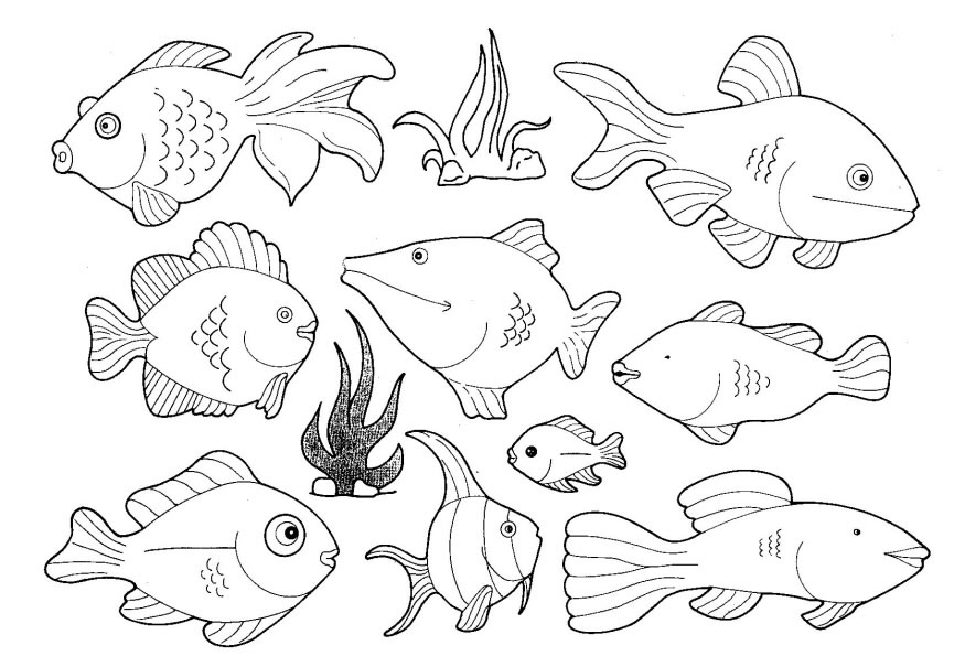 Line Drawings Of Ocean Animals : Activités du mois